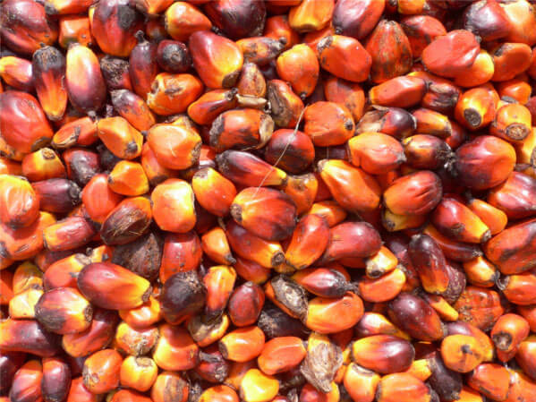 The Search Is On For Sustainable Palm Oil